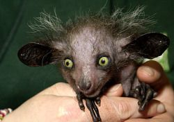 10 Bizzare photos of Creatures that are not Photoshopped