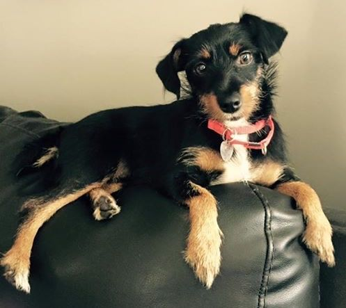 My name is Dakota but they call me Dottie. I'm new to Last Day Dog Rescue and I'm excited at the prospect of finding my new forever home. I lived in a home once but for some reason they gave me up. I'm told I am a wire haired terrier mix which is good news because I thought I just needed some conditioner...
