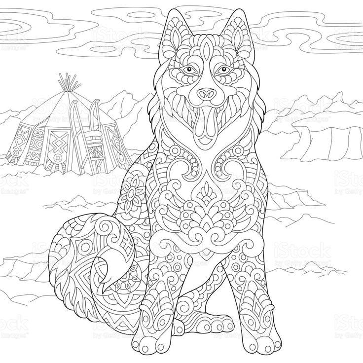 Coloring page of Alaskan malamute or Siberian husky