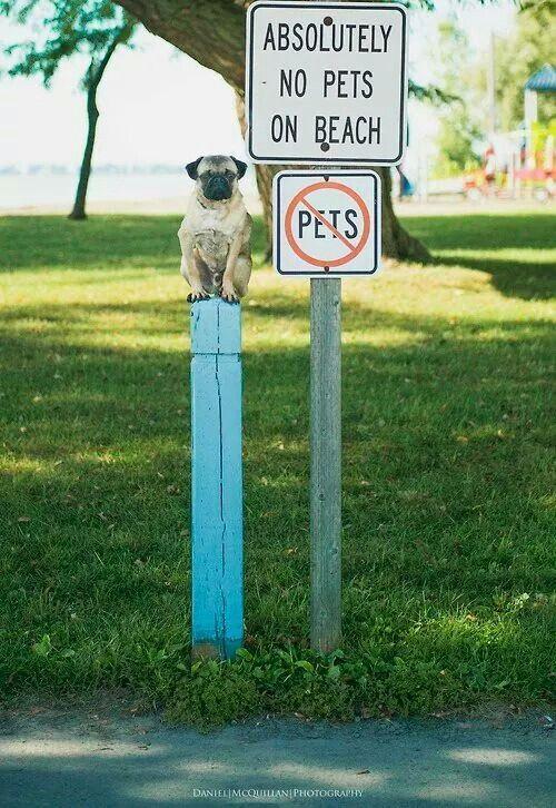 http://europug.eu/ Pug On A Sign