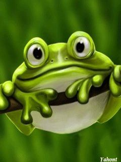 Funny Frog Pictures | Funny frog - mobile9