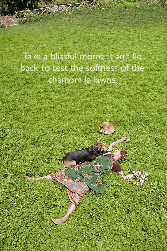 Grow yoCur own chamomile Lawn  - Babylonstoren