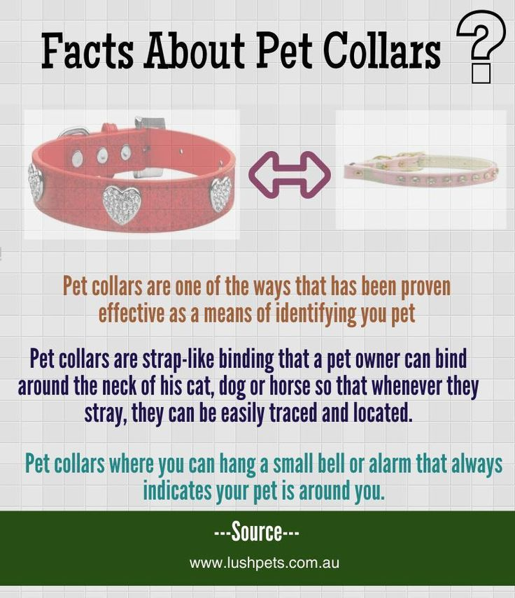 Get customized pet collars from your nearest pet store namely lush Pets and give prince/princess like feeling to your lovable pets. Always be attached to your pets using the beautiful collars. http://www.lushpets.com.au/