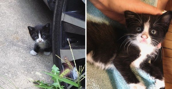 Shy Kitten Wanders Into Backyard For Help When She Discovers Cuddles Her Life Changed Forever Kittens Animal Rescue Stories Cuddling
