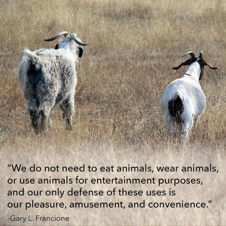 9 Best Inspiring Animal Rights Quotes Images On Pinterest