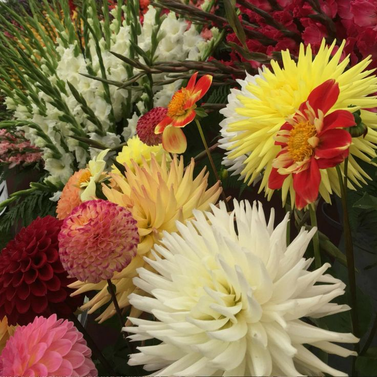 The Taunton Flower Show is one of the most famous and longest running flower shows in the country.
