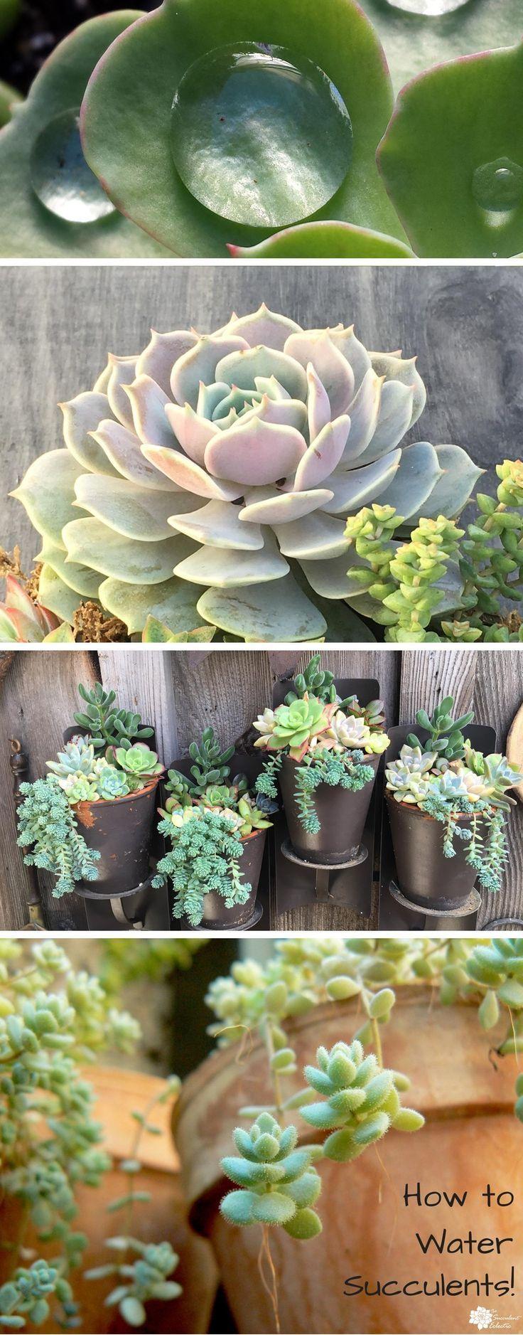 best gardensucculents images on pinterest succulents house