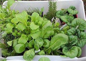 Ocho verduras para cultivar en su jardín en otoño