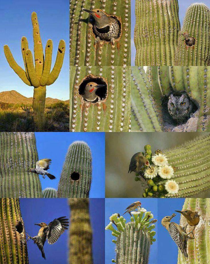 Animals That Live in a Cactus Cactus plants, Cactus
