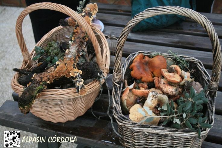 Si quieres aprender a identificar setas y hongos, no te puedes perder el otoño micológico de Adamuz.