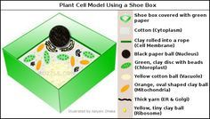 Plant cell model using shoe box