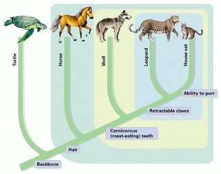 examples of vertebrates | Some examples of vertebrates are: cows, dogs, fish and frogs.