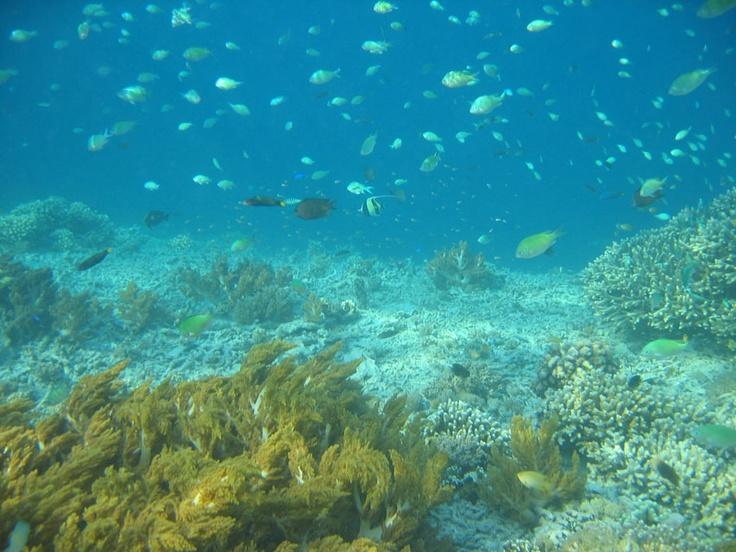 Lombok, snorkeling à peu de profondeur.