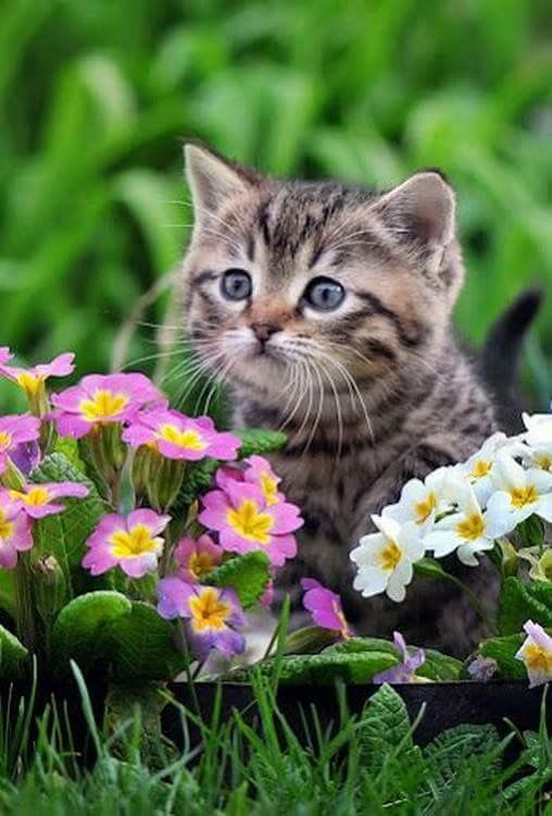 When your watering your flowers this kitty will be there to help