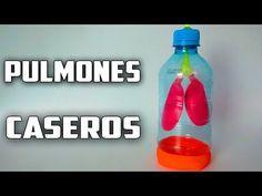 Como Hacer Una Maqueta De Pulmones Caseros Que Respiran-Proyecto Escolar - YouTube