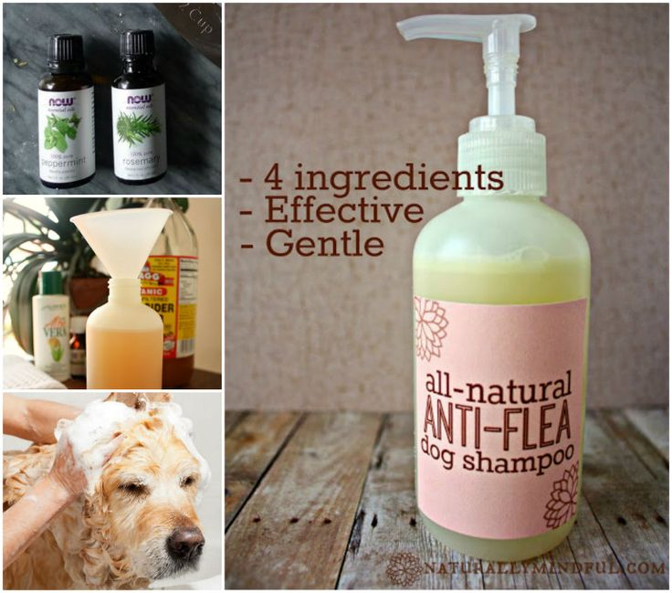 All-natural anti-flea dog shampoo 1/2 cup water (preferably distilled) 1/3 cup pure castille soap (I used this one) 1 tsp olive oil (find it here) 20 drops of pure essential oil. I used 10 rosemary and 10 peppermint Combine all ingredients using a small funnel (find it here), shake well before each use. It should keep for about 6 month.