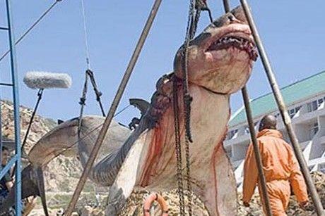 15-Ton Prehistoric Shark Captured Off Coast Of Pakistan -  Think it's fake.  http://worldnewsdailyreport.com/15-ton-prehistoric-shark-captured-off-coast-of-pakistan/#sthash.wyij92qI.dpuf