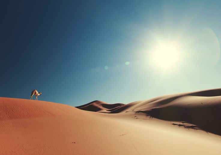 Infinito è l'orizzonte di sabbia che si perde a vista d'occhio nel deserto e infinito è lo scenario che si ammira dalla base del grattacielo più alto del mondo. Il viaggio negli Emirati Arabi è modernità e storia, lusso e semplicità.