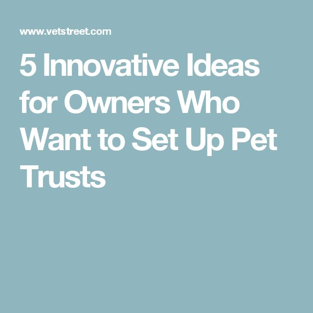 5 Innovative Ideas for Owners Who Want to Set Up Pet Trusts