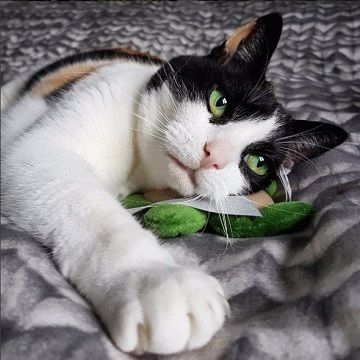 心まで見透かされそう……アンニュイな猫さんに陶酔しちゃう