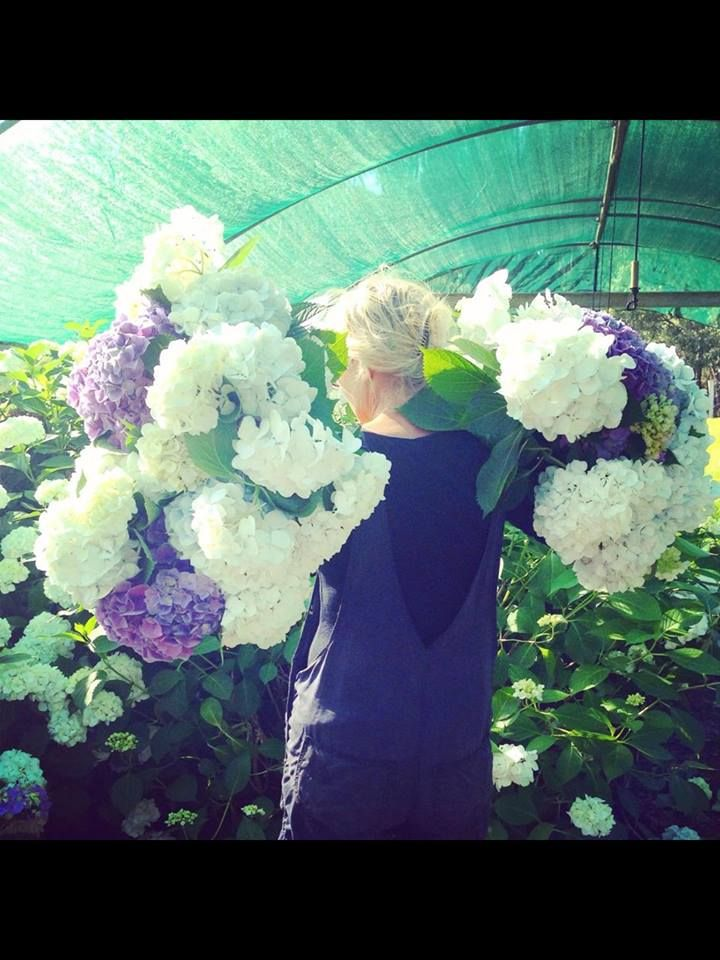 Hydrangea Season at Avonlea Flowers