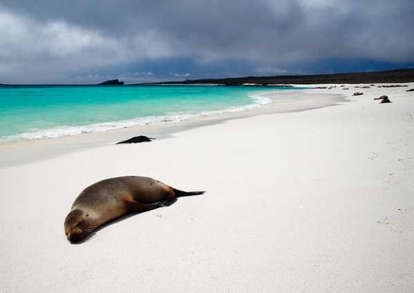 Fauna Islas Galapagos http://www.southamericaperutours.com/southamerica/12-days-wonders-of-machu-picchu-and-galapagos.html