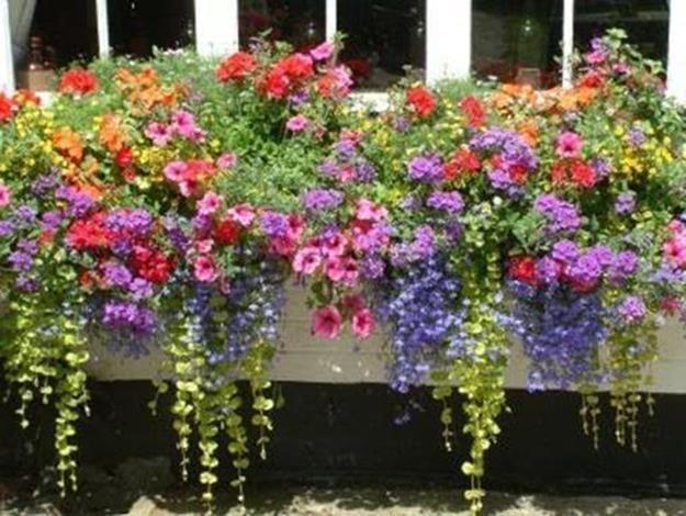 32 Beautiful Ideas Cascading Flowers For Window Boxes 21 Window
