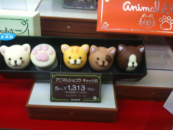 cat chocolates
