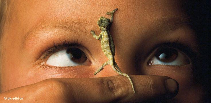 Mit seinen Haftpfoten hält sich das Chamäleon an der menschlichen Stirn fest: für den Jungen ein lustiger Spielgefährte. Die Erwachsenen im Volk der Hutu im afrikanischen Land Ruanda hingegen glauben, dass die grünen Echsen Unglück bringen – Diese Karte hier online kaufen: http://bkurl.de/pkshop-211125 Art.-Nr.: 211125 Nahkontakt   Foto: © Michael K. Nichols   Text: Rolf Bökemeier