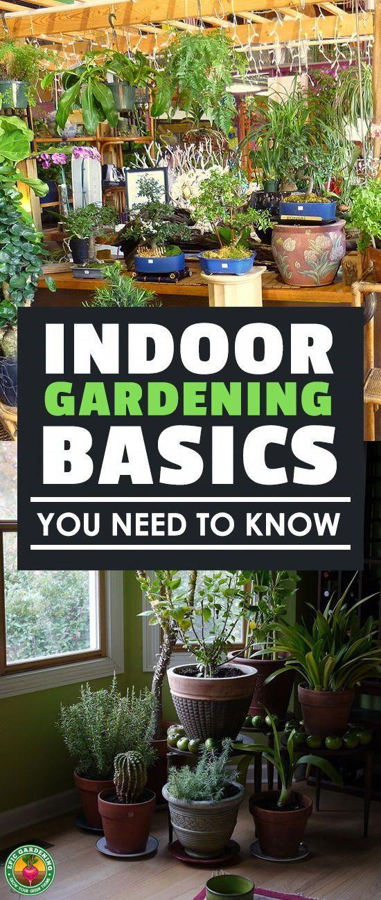 Just beginning to garden indoors? These indoor gardening basics will help you ge…