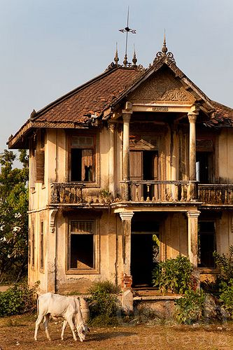 1930's abandoned french-colonial villa with cow   Kandal Province, Cambodia