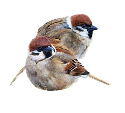 birds, birds