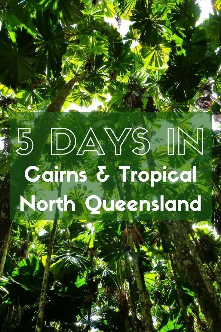 Five days in Cairns and Tropical North Queensland is just long enough to give you a taste of the amazing things this region has to offer. Explore the Great Barrier Reef, Daintree Rainforest, ancient Indigenous culture and a thriving city scene all on this whirlwind itinerary.
