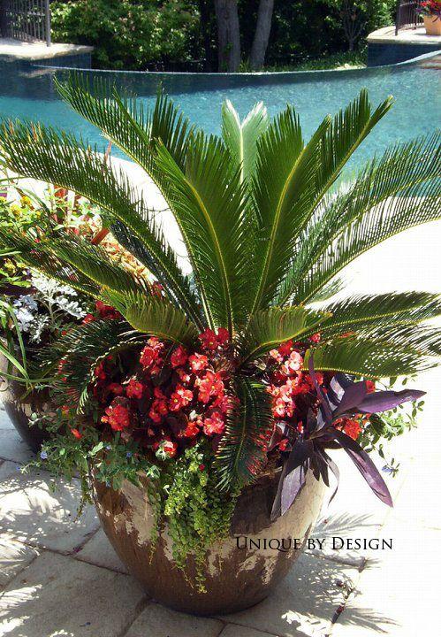 Sago Palm, Begonias, Purple Heart, Moneywort And Blue Daze.