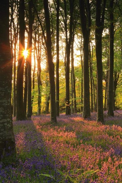 ✿⊱❥ Raios de sol na floresta.