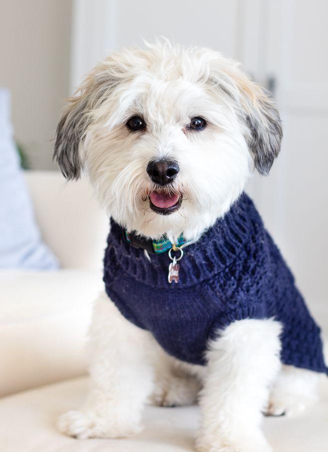 Puppies For Sale Orlando Fl Justpuppies Net Puppies Puppies For Sale Animals
