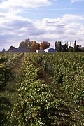 Stratus wines