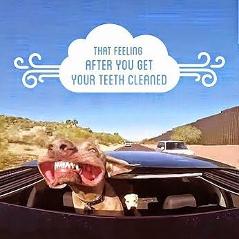 When was your last #teethclean? #badbreathnomore #halitosis #fresh #refreshing #dentalhumour #dentalhumor #dogbreath #teethcleaning #funny #happyteeth #healthygums #prevention #airflow #scaleandpolish #smile #smilemoreoften by thedentistsofdidsbury Our Teeth Cleaning Page: http://www.myimagedental.com/services/preventive-dentistry/exams-and-cleaning/ Other Preventive Dentistry services we offer: http://www.myimagedental.com/services/preventive-dentistry/ Google My Business…