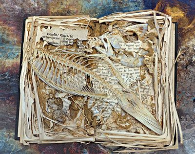 The Zymoglyphic Museum Rosamond Purcell's Art from Decay