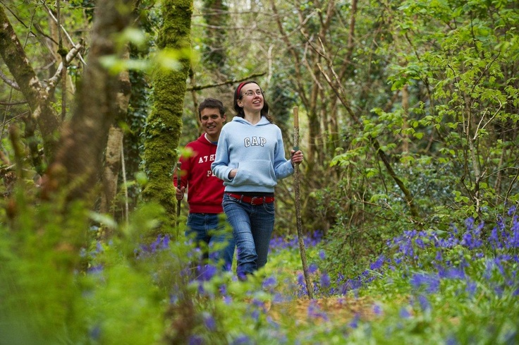 Take a walk everyday in the amazing woodlands on Liss Ard Estate.