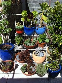 Small Gardens - eclectic - landscape