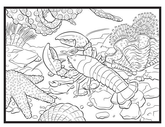 Lobster Single Coloring Page Digital Download From Of An Easy Nature A Book