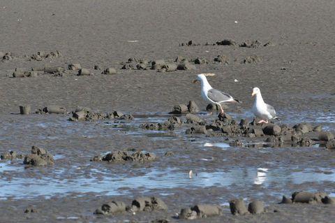 Necanicum Estuary in Seaside harbors natural surprises: Wild about Oregon coast | OregonLive.com