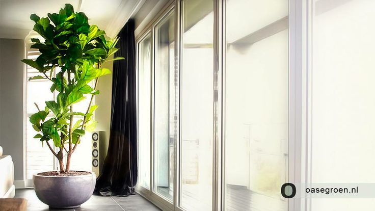 Grote Plant Slaapkamer : ... Slaapkamers op Pinterest - Blauwgroene ...