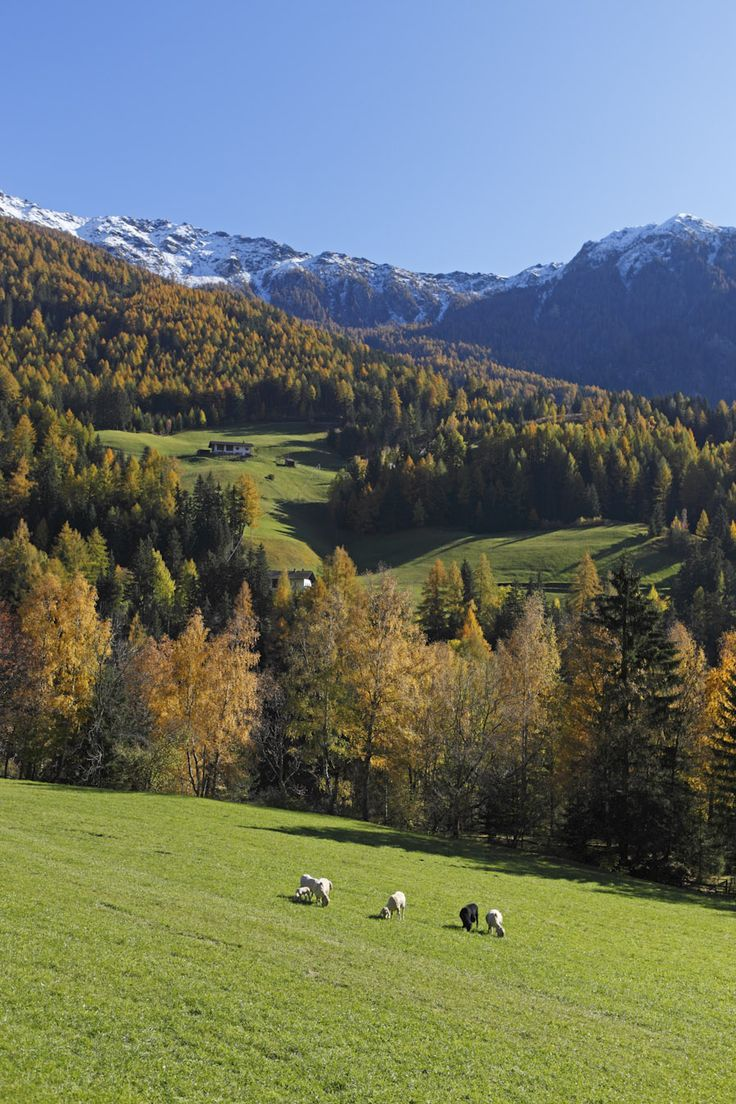 """Roter Hahn"" farm stay Ralserhof in Pfitsch/Val di Vizze - South Tyrol in the Italian Alps"