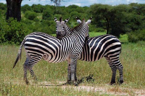 Interesting Facts About Tanzania: Ruaha National Park