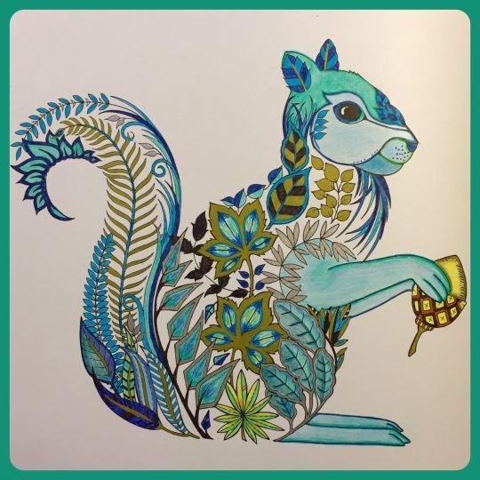 168 Best Millie Marotta Animal Kingdom Images On Pinterest
