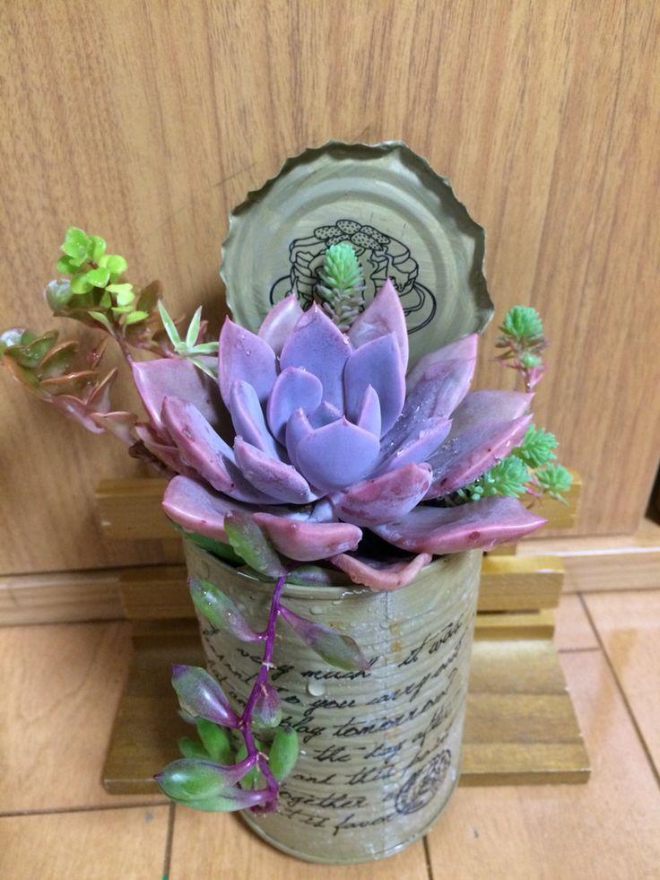 Beautiful purple succulent!
