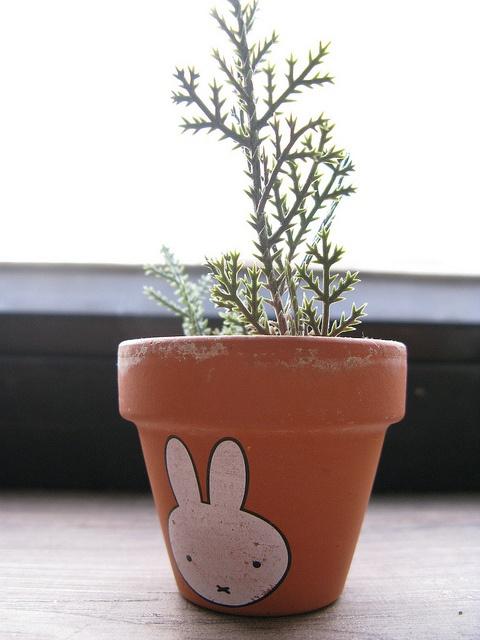 It's Miffy!
