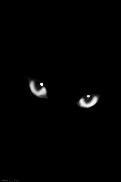 (KO) Black cat. Stuninngly beautiful eyes full of mystery. There may be some naughtiness in there, too.